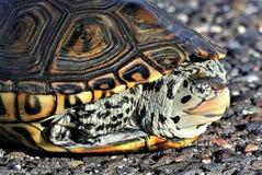 Die lächelnde Schildkröte stockfotos