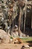Die Löwe-Höhle Stockbilder