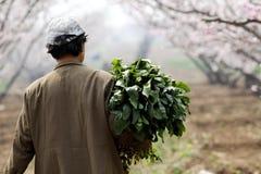 Die Landarbeiter von China. Lizenzfreie Stockfotografie
