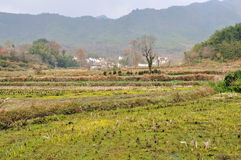 Die Landreisfelder Stockfoto