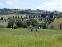 Die Landschaft der Toskana Stockbilder
