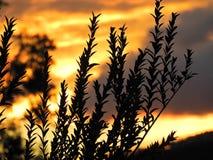Die Landschaft des Sonnenuntergangs Explosion von Farben stockbild