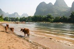 Die Landschaft in Guilin, Porzellan Stockbild