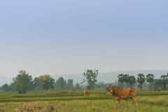 Die Landschaften Lizenzfreies Stockbild