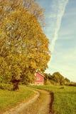 Die Landstraße, die Herbst führt, färbte Baumweinleseeffekte Stockbild