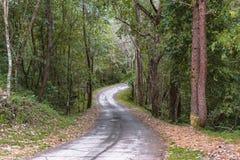 Die Landstraße durch den Wald auf dem Berg stockfotos