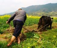 Die Landwirte pflügen ihre Felder innen Stockbild