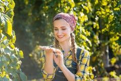 Die Landwirtfrau, welche die Qualität dieser Jahre überprüft, hüpft Ernte lizenzfreie stockfotos