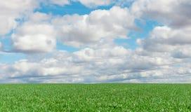 Die landwirtschaftliche Landschaft lizenzfreie stockbilder