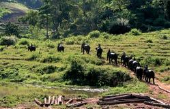 Die Lebensart von Leuten mit dem Elefanten im Leben zusammen als Familie für eine lange Zeit Maesa-Elefant-Lager bei Mae Rim, Ch Stockfotografie