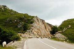 Die leere Straße in Montenegro Lizenzfreies Stockfoto