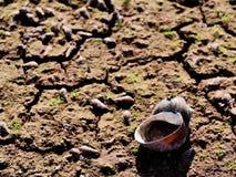 Die Leiche des kleinen Lebewesens im trockenen Wasser stockfotos