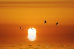 Die letzte Sonne auf dem Meer Lizenzfreies Stockfoto