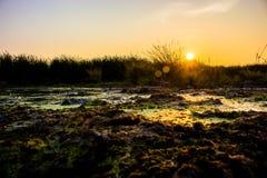 Die letzten Strahlen der Sonne fallen auf den Horizont, die schönen gras Stockfotografie