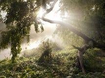 Die Leuchte im nebelhaften Morgen Stockbild