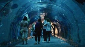 Die Leute, die innerhalb des Oceanarium gehen, legen an Dubai-Mall einen Tunnel an stock video footage