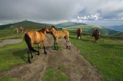 Die Liebkosung der Pferde - Balkan-Berge, Bulgarien lizenzfreie stockfotos