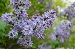 Die lila Blume Lizenzfreies Stockfoto