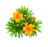 Die Lilie, die rot sind und die Orange blüht den lokalisierten Blumenstrauß Stockfotografie