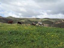 Die Linie von Pferden stockfotos