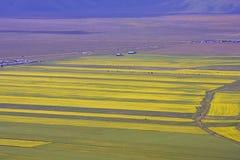 Die Linse, die in Castelluccio di Norcia blüht Tausenden Farben Lizenzfreie Stockfotos