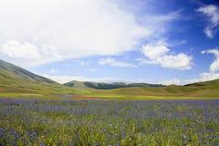 Die Linse, die in Castelluccio di Norcia blüht Tausenden Farben Lizenzfreies Stockfoto