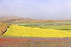 Die Linse, die in Castelluccio di Norcia blüht Tausenden Farben Stockbild