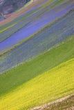 Die Linse, die in Castelluccio di Norcia blüht Tausenden Farben Lizenzfreie Stockfotografie