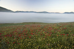 Die Linse, die in Castelluccio di Norcia blüht Tausenden Farben Stockbilder