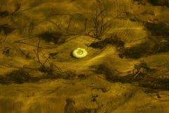 Die Locke einer Schnecke an der Unterseite, unter einer Schicht Wasser Stockfotografie