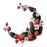 Die lokalisierte gezeichnete Hand winden mit Erdbeere und Blumen Rundes Feld lizenzfreie abbildung