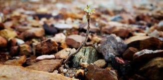 Die lokalisierte Grünpflanze wachsen auf dem Boden und dem Felsen heran Stockfotos
