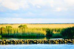 Die Louisiana-Sumpfgebiete stockfoto