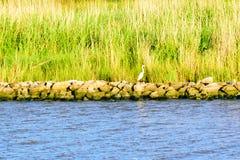 Die Louisiana-Sumpfgebiete stockfotos