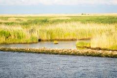 Die Louisiana-Sumpfgebiete lizenzfreie stockbilder