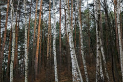 Die ` Lungen `` des Planeten lizenzfreies stockfoto