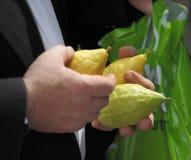 Die männlichen Hände halten eine rituelle zitronengelbe Frucht an Lizenzfreies Stockfoto