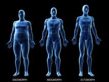 Die männlichen Körperbauten stock abbildung