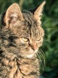 Die Mündung einer braunen Hauskatze Die Katze schaut oben Gelbgrüner undeutlicher Hintergrund mit Kreisen Katze ` s Gesichtsnahau stockfotografie