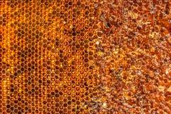 Die Mütze abgenommene Bienenwabe mit dem Honig Lizenzfreies Stockbild
