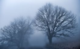 Die Magie des Nebels stockfoto