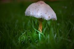 Die Magie des Pilzes Lizenzfreie Stockbilder
