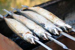 Die Makrele wird auf Aufsteckspindeln gebraten Lizenzfreie Stockbilder