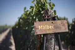 Die Malbecweinberge von Mendoza lizenzfreies stockfoto