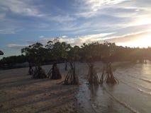 Die Mangroven Lizenzfreies Stockfoto