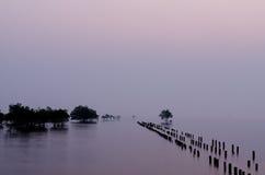 Die Mangrovenbäume im Meer stockbild