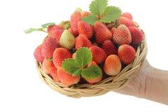 Die Mann ` s Hand hält Weidenkörbe mit frischen Erdbeeren und den Blättern, die auf weißem Hintergrund lokalisiert werden Lizenzfreie Stockfotos