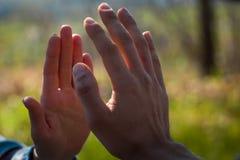 Die Mann- und Frauenpalmen, die sich fast auf natürlichem undeutlichem Hintergrund berühren, erleuchten durch Sonne stockbilder