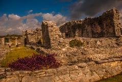 Die Mayaruinen in Tulum, Maya Mexikos, Riviera, Yucatan Tulum war eine der letzten Städte, die vom Maya errichtet wurden und bewo Stockbild