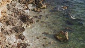 Die Meereswogen, die mit brechen, spritzt auf nassen Felsen auf Strand stock video footage